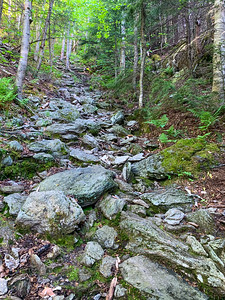 Rugged trail, straight up the fall line, on Worcester Mountain.