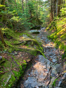 A well-worn trail descends through the green forest.