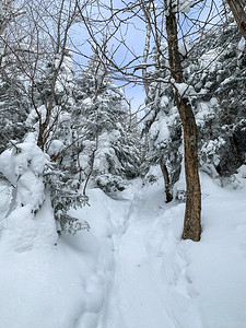 As the trail climbs, it enters spruce-fir forests; trail to Worcester Mountain, Vermont.