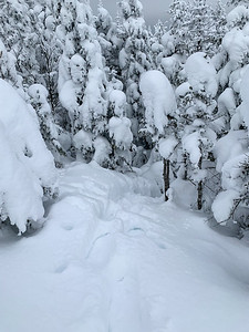 Looking back on the final pitch to Worcester Mountain - an increibly steep climb through deep powder. Vermont.