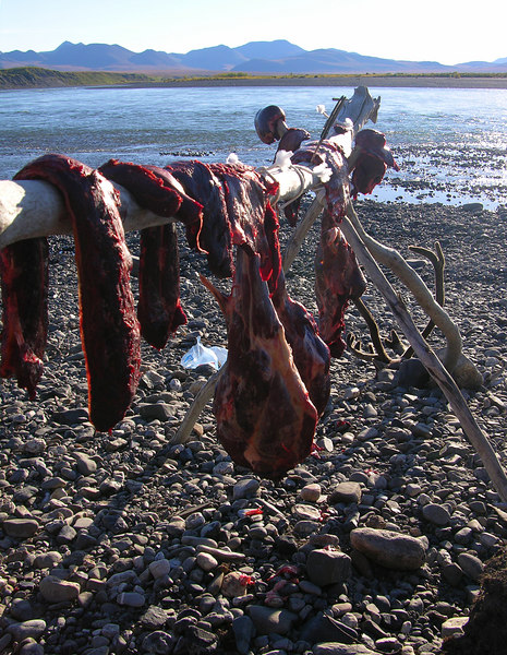 The morning of Day 15 (August 26) was clear and all proved to be quite well at the meat cache.  A cool (high 30's) and windy night had worked wonders on the meat.  A beautiful protective crust had developed and once in game bags our meat was ready for transport.