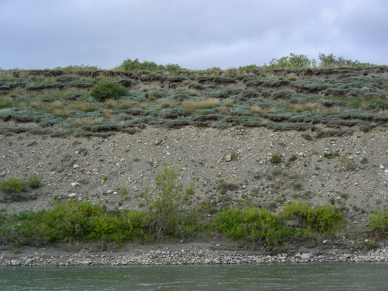 This river bluff supports an interesting plant assemblage of what appears to be grasses and wormwood (Artemesia). Many paleo- folks think that this may have been a common plant community type during the time of the mammoths. These days this kind of community is interestingly most often found on south-facing river bluffs.