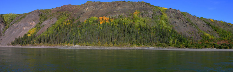A panoramic view of poplar and spruce in the canyon.  Just a slight hint that fall is on the way.