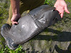 This lucky boot spent the last three days about 100 yards from our boat and apparently had been visited by a salivating carnivore.  No recognizable sign (paw prints, droppings, etc.) was found near the boot so we surmised that either a stealthy bear had taken a bite or perhaps a wolverine had taste tested the rubber.  Regardless of whose canines had punched a hole in the boot, we were happy that our food and the rubber (actually hypalon) raft were accounted for and intact!