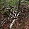 For some reason, this pile of birch attracted my and camera's attention.