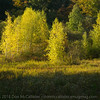 Birches and meadow