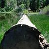Fallen Tree on the shore of Lake Jenks