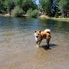 Baron enjoying Lake Jenks