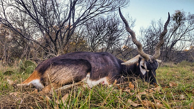 Blackbuck Hunt 2016