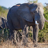 Africa 2017 photo safari on July 25, 2017 in Johannnesburg, South Africa. Stephen Smith Photography