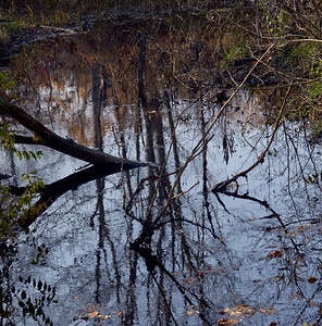 Reflections on Canal