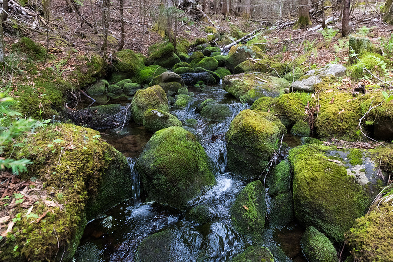 A brook along the Snapper Trail at Mount Moosilauke.