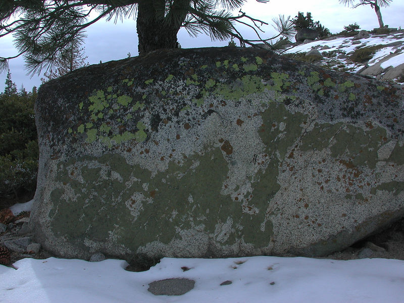 An epidote (pistacio green mineral) and lichen covered boulder.