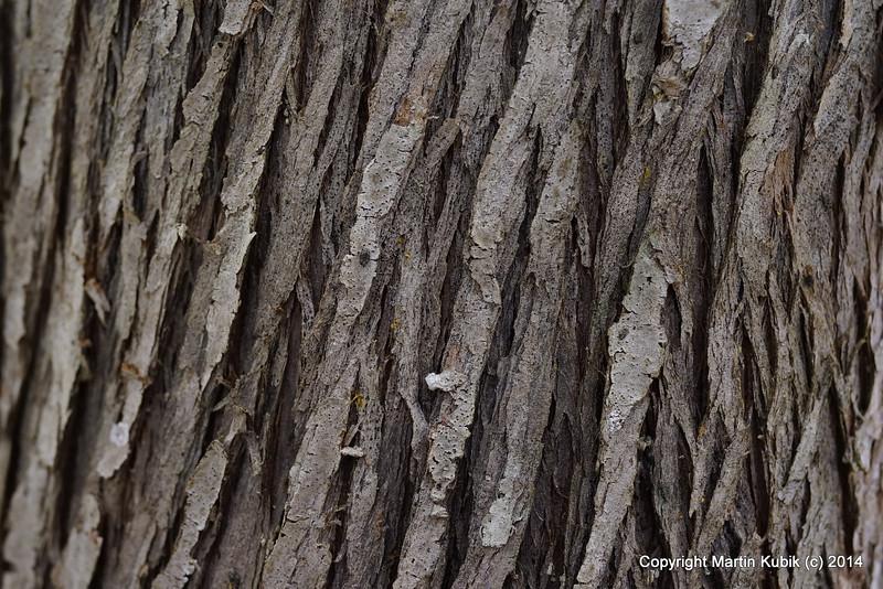 Cedar bark is mesmerizing.