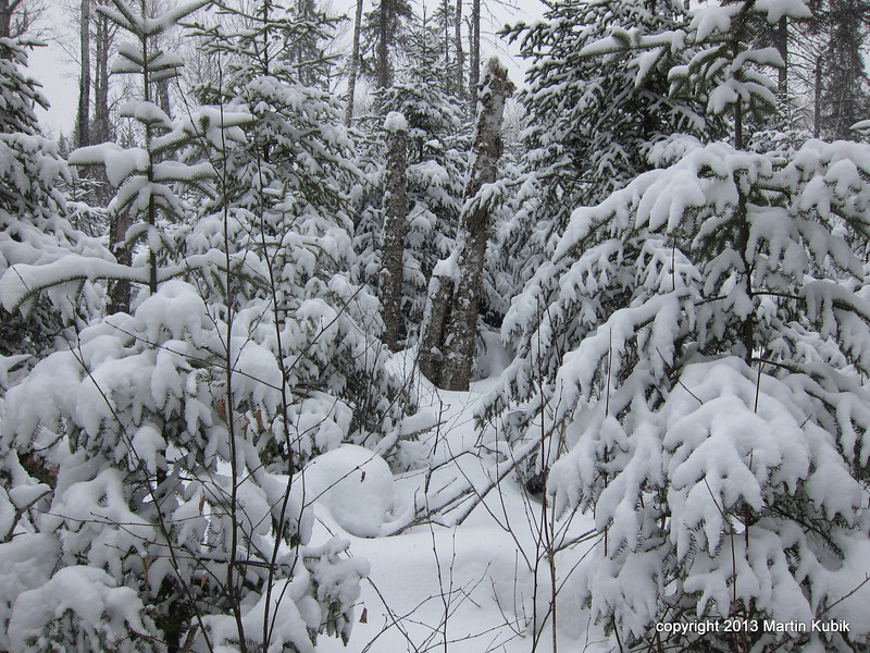 This is bushwacking at its worst.  Gortex or no gortex, you will be wet in less than three minutes brushing against the wet snow hanging on these balsam fir trees.
