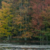 Maples on Otter Pond