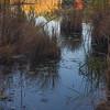Otter Pond's edge