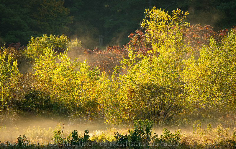 Morning mist by pond in meadow #1