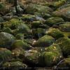 Dry autumn streambed