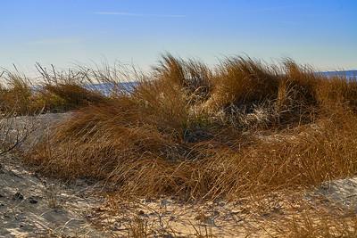 Hammonasset Beach Grasses
