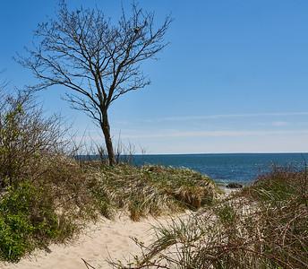 Sandy Path with Tree