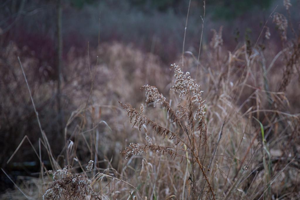 IMAGE: https://photos.smugmug.com/Outdoors/Hawk-Meadows-Park-12-9-2018/i-PmBzQhD/0/8eaecff5/XL/J66A2147-XL.jpg