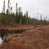 Entrance to Mine Lake - lots of black spruce, no tamarack.