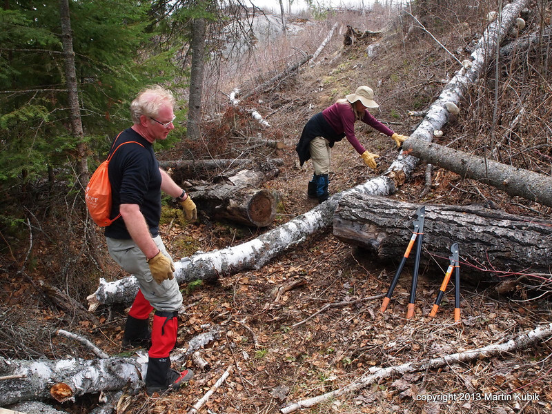 BWAC crews cut this big poplar in 2009 (see photo in that photo essay).  Now Tom and Rebecca are removing good size birch.