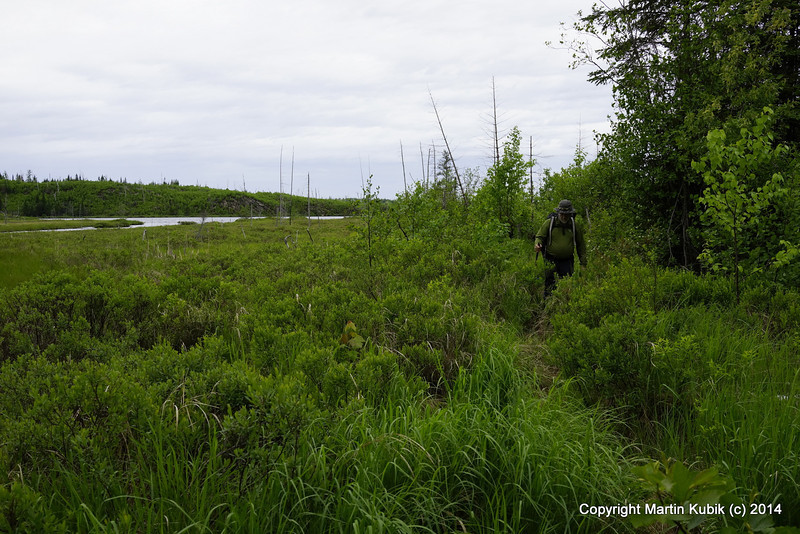 The good news here is that there is a visible tread in tall grass around Seahorse Lake.  But there are still many pesky and nasty treefalls contributing to repetitive stress syndrome fatigue every time a hiker steps over a log.