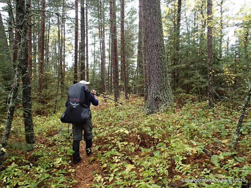 Ahh, how do you spell relief?  White pine forest with pine needles covering the tread.