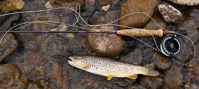 Lake City, Colorado Flyfishing July 2008