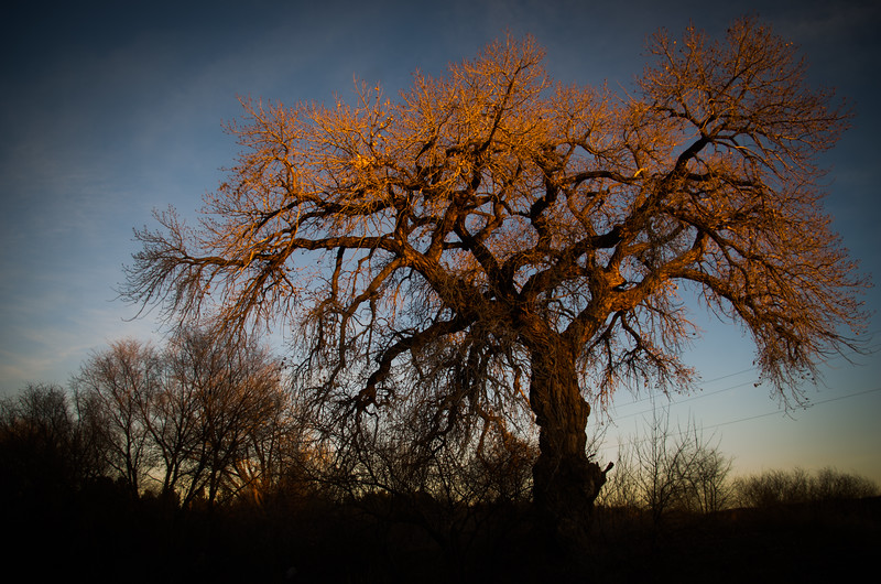 Birthday Cottonwood Sunset