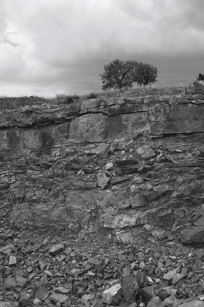 Tree Above the Quarry