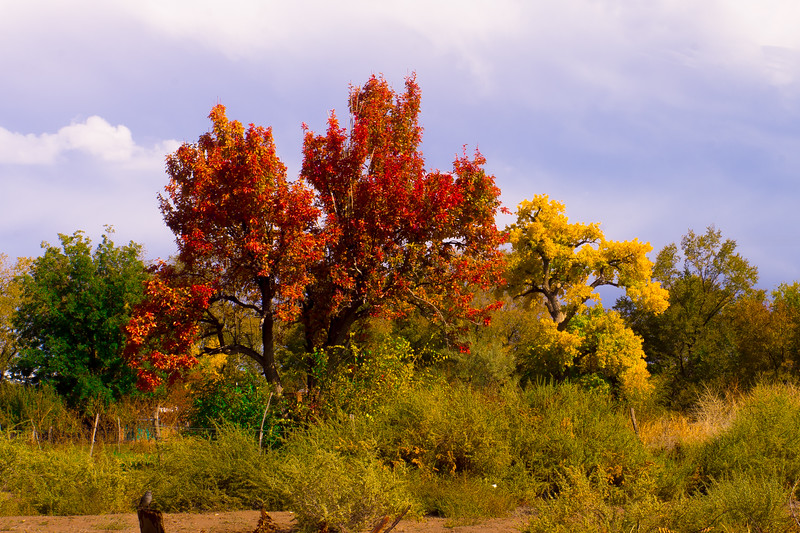 New Mexico Fall Colors and  Bird