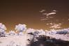 <h1>Cheep Landscape ;-)</h1>