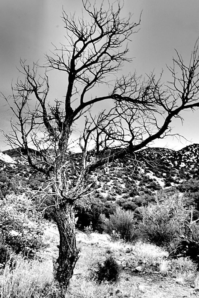 Tree in Retinex Vision.