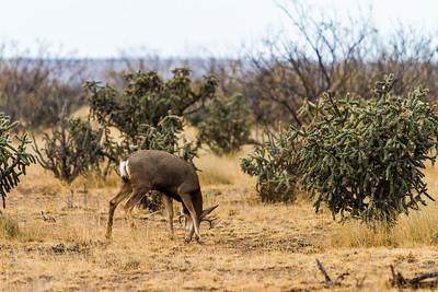 Mule Deer Hunt 2014