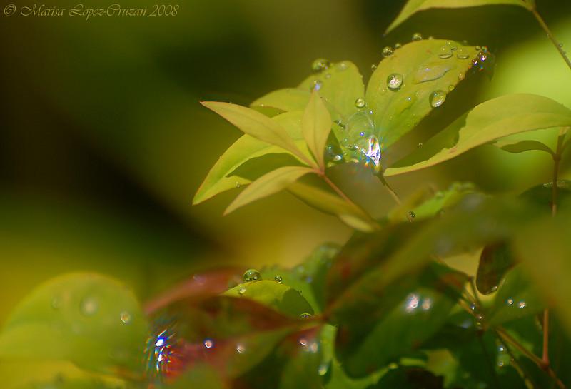 Sparkling Leaves