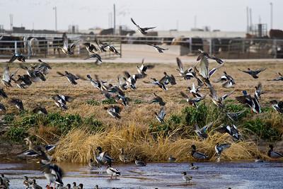 Panhandle Bird Hunting