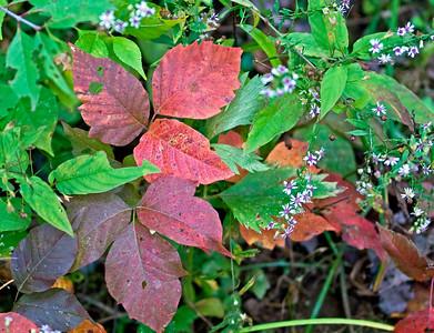 Pinchot Park Oct 2008