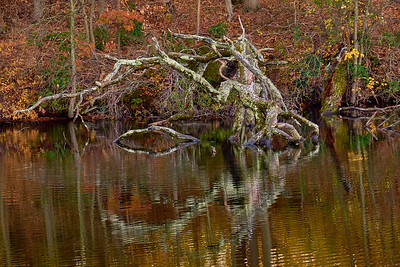 Lake Whitney Wood in the Water