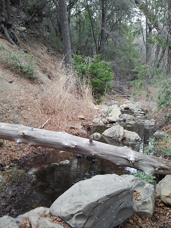 Reyes Creek 02/14