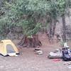 Beartrap Creek Campsite