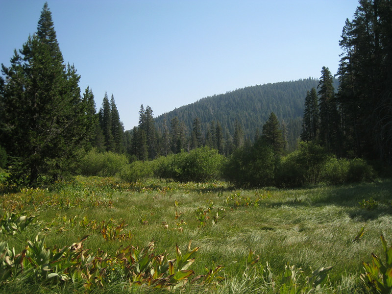 Part of McRae Meadows