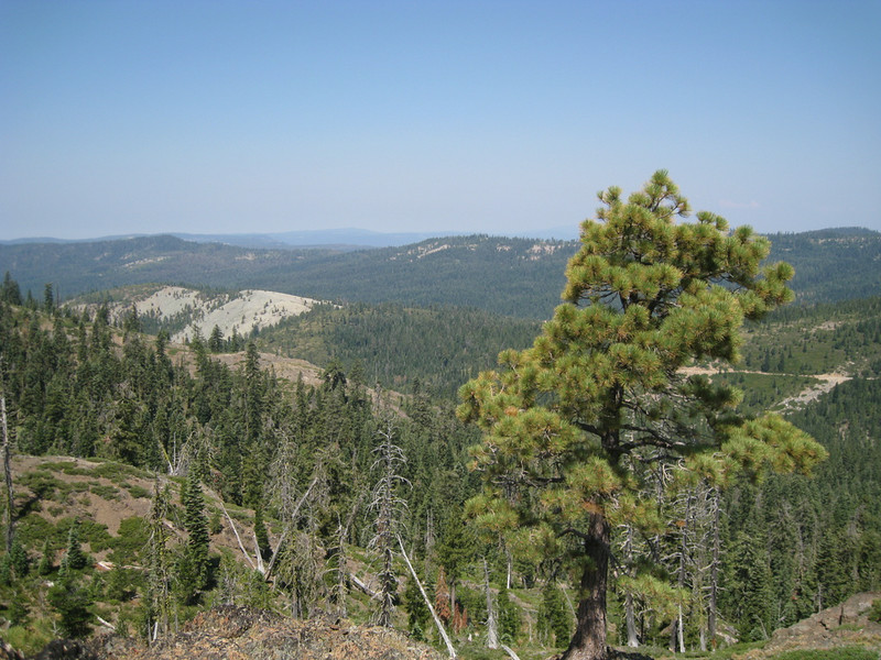 Sawmill Ridge in the near distance and Gibsonville Ridge beyond