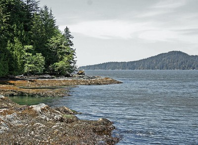 West Coast of Vancouver Island  - BC  -  Canada