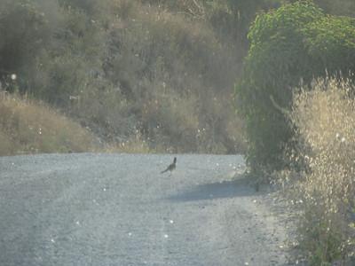Otay Truck Trail 06-12-2010