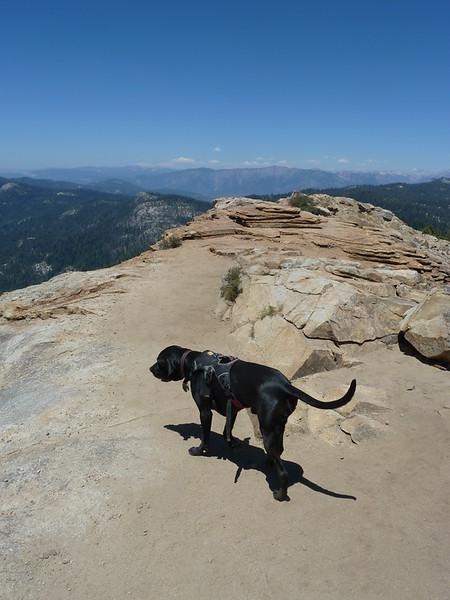 Sawyer atop Big Baldy