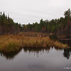 A serene view from a beaver dam.