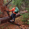 We saw many red and white pine stands and and climbed over several big (by Minnesota standards) treefalls like this one.